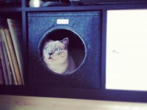 Katzen- und Hundehöhlen
