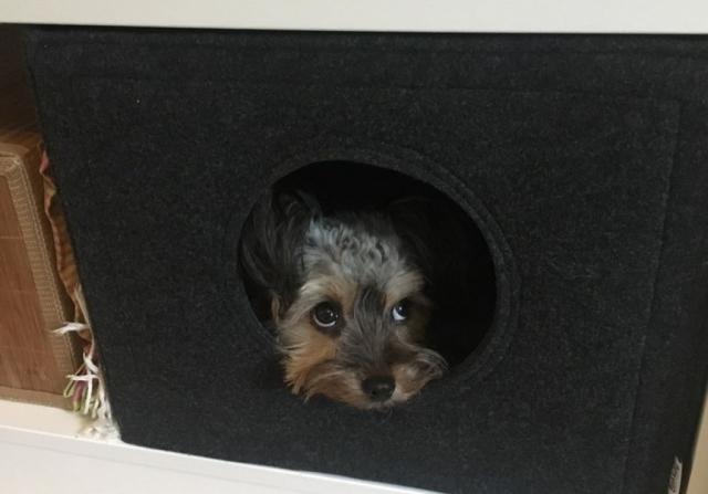 Hundehöhle aus Filz
