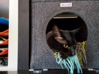 Katzenbett mit Katze