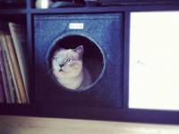 Katzenhöhle aus Filz dunkelgrau mit Katze von Stich-haltig