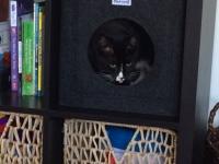 Katzenhöhle Regal